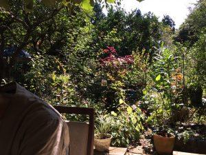 マツムシコーヒー ガーデン