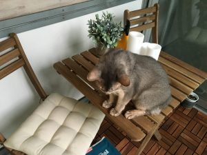 IKEA ガーデンテーブルセット